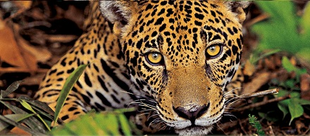 brazili 235 reistips en reisadvies