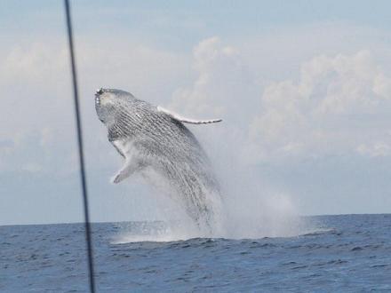 De beste plek om walvissen te zien is het zuidwesten van Costa Rica. Voor de kust van het schiereiland Osa en van Costa Ballena zijn er per jaar twee perioden waarin bultrugwalvissen te spotten zijn. Goede plaatsen om walvissen en dolfijnentours te doen zijn bijvoorbeeld Uvita en Drake Bay.