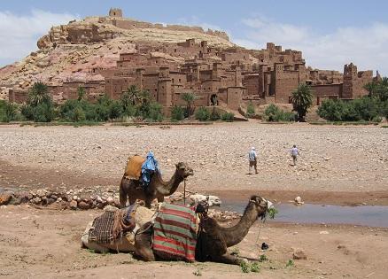 Kamelen in het noorden van Marokko, bij de rivierbedding bij Taourirt