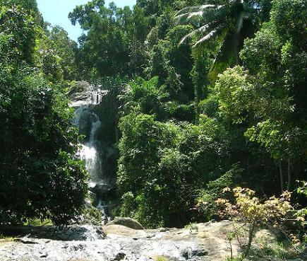 De jungle van Koh Samui, Thailand