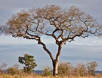 Het Kruger Nationaal Park of kortweg Krugerpark is een omvangrijk wildpark in het noordoosten van Zuid-Afrika, op de grens met Zimbabwe en Mozambique. Het is een van de bekendste wildparken in Afrika en trekt jaarlijks een groot aantal toeristen.