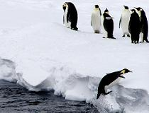 Pinguins op Antarctica, van ColdImages
