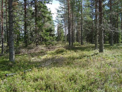 Orsa Grönklitt, Zweden