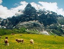 Jungfrau Regio, Berner Oberland, Zwitserland